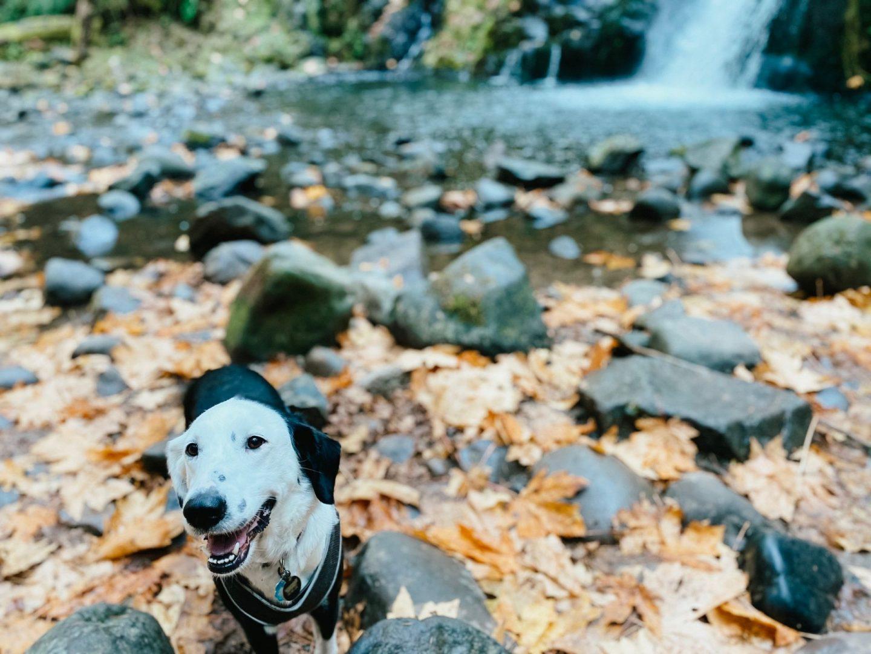dog friendly hikes pnw