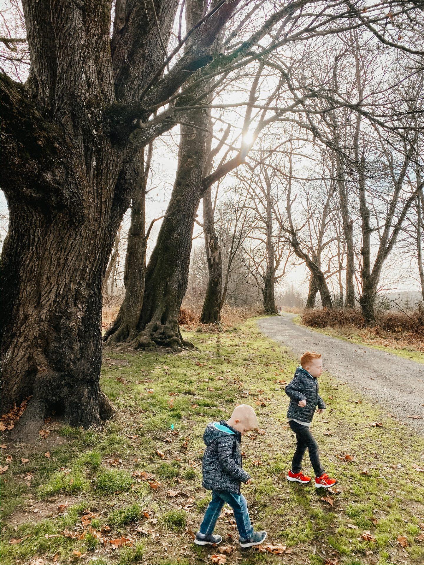 Nisqually Wildlife walking paths