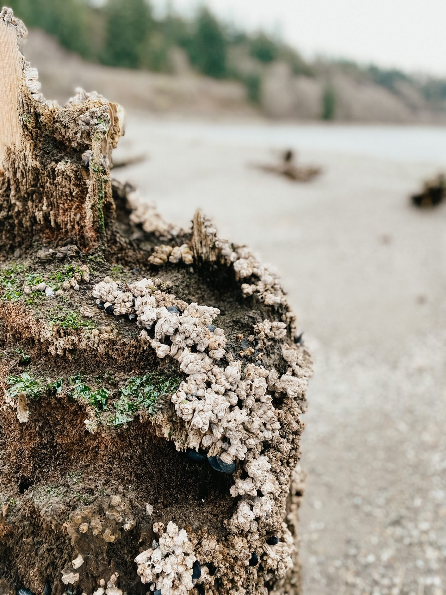 barnacle beach