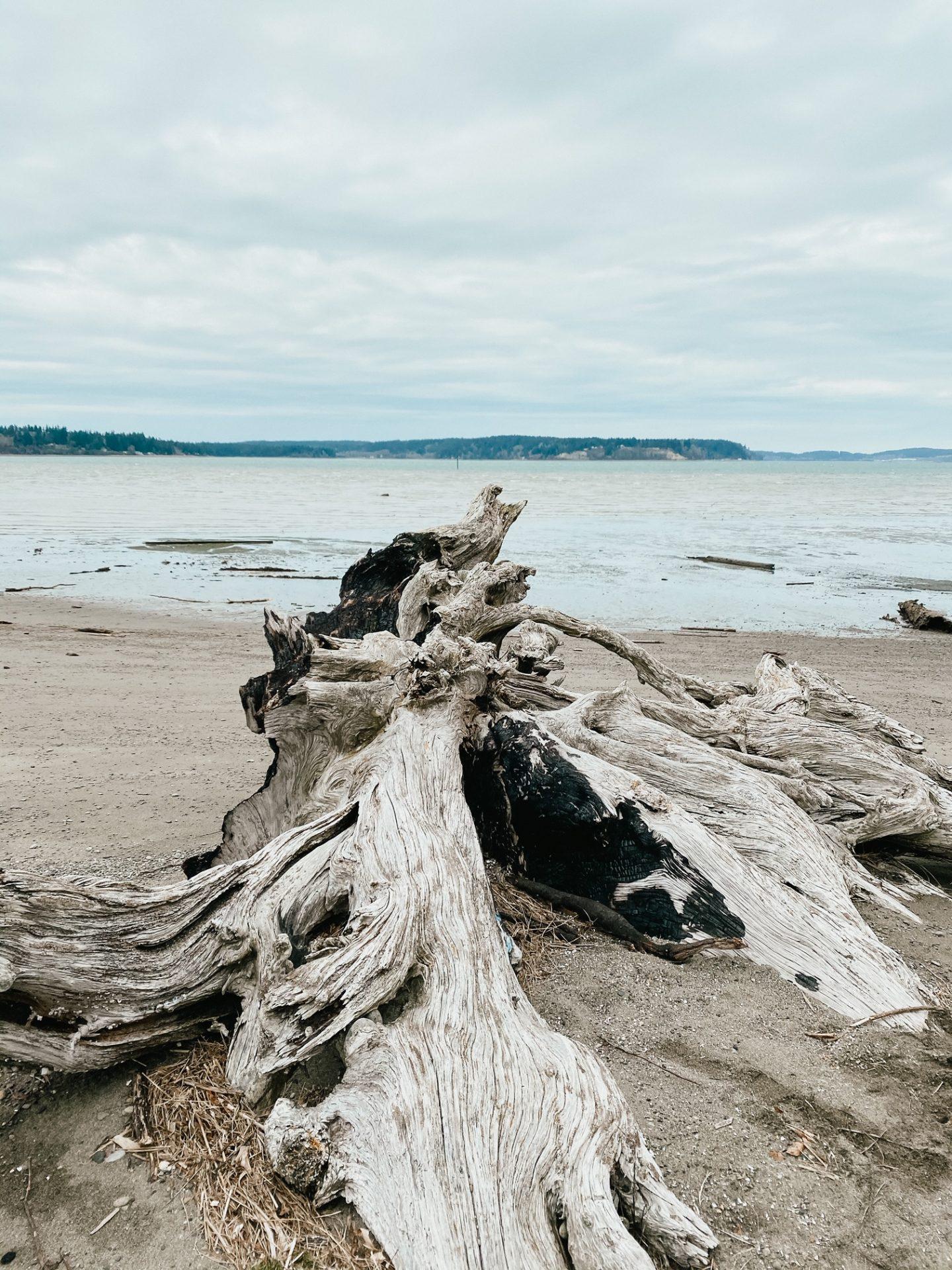 driftwood beach dupont