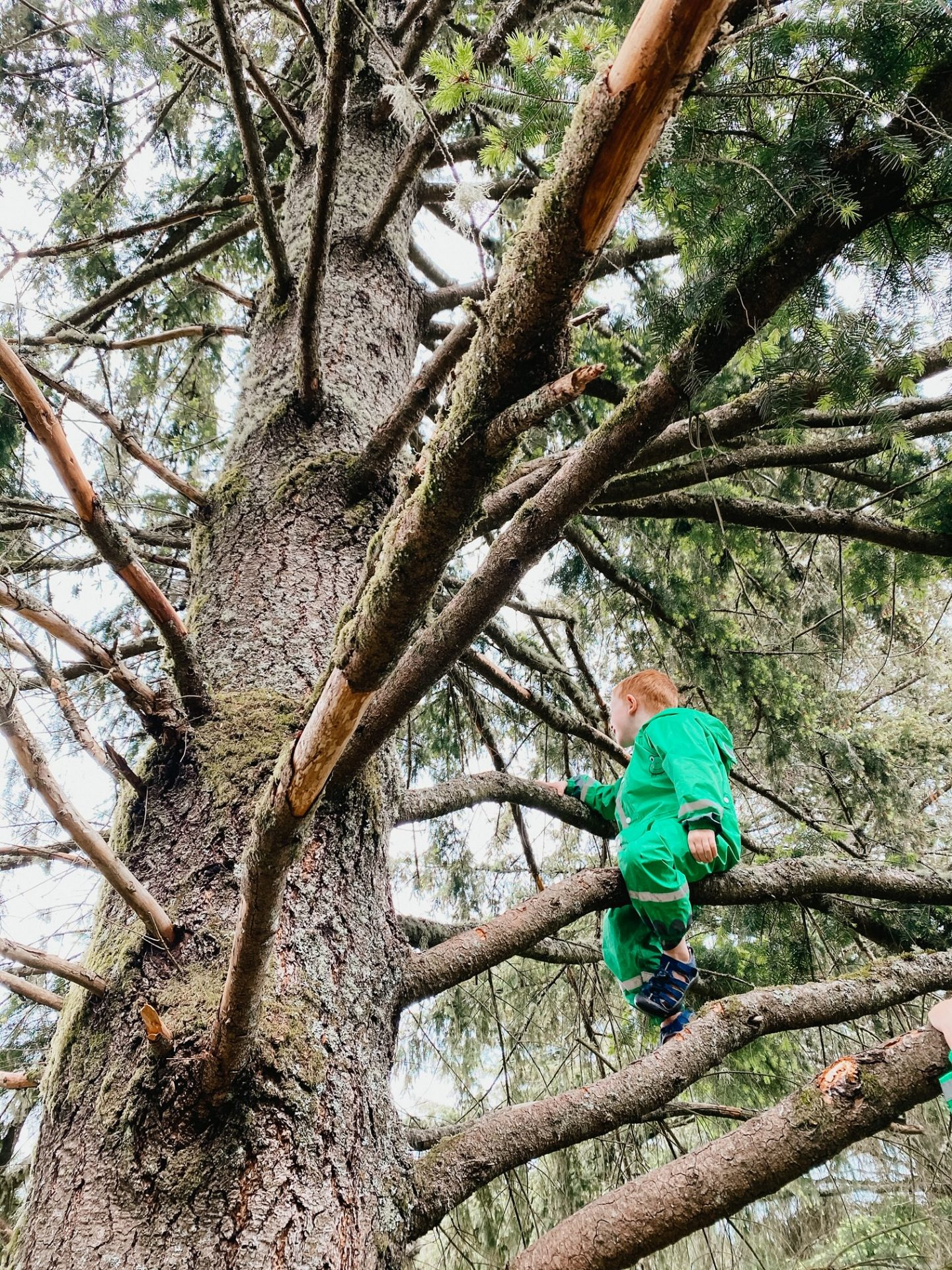 how to climb trees