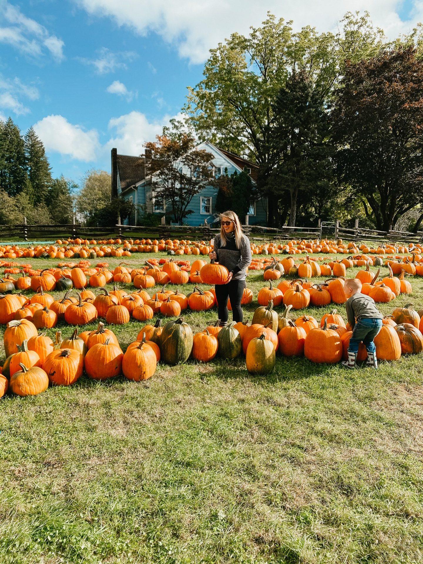 best pumpkin picking near jblm
