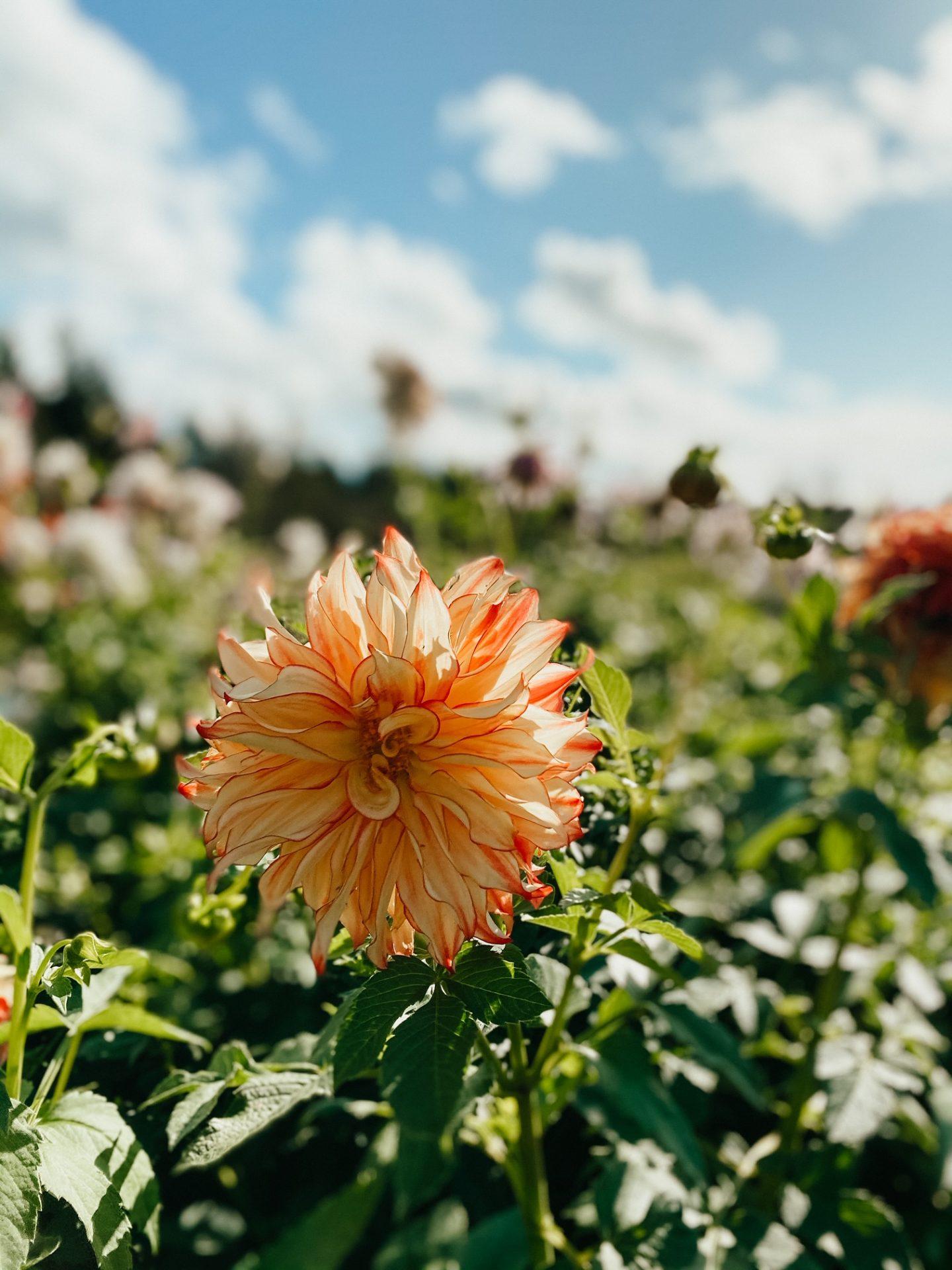 fresh flowers olympia