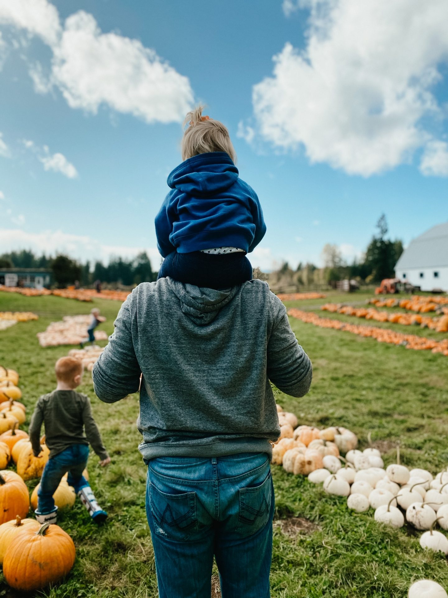 pumpkin picking at ashley creek farm