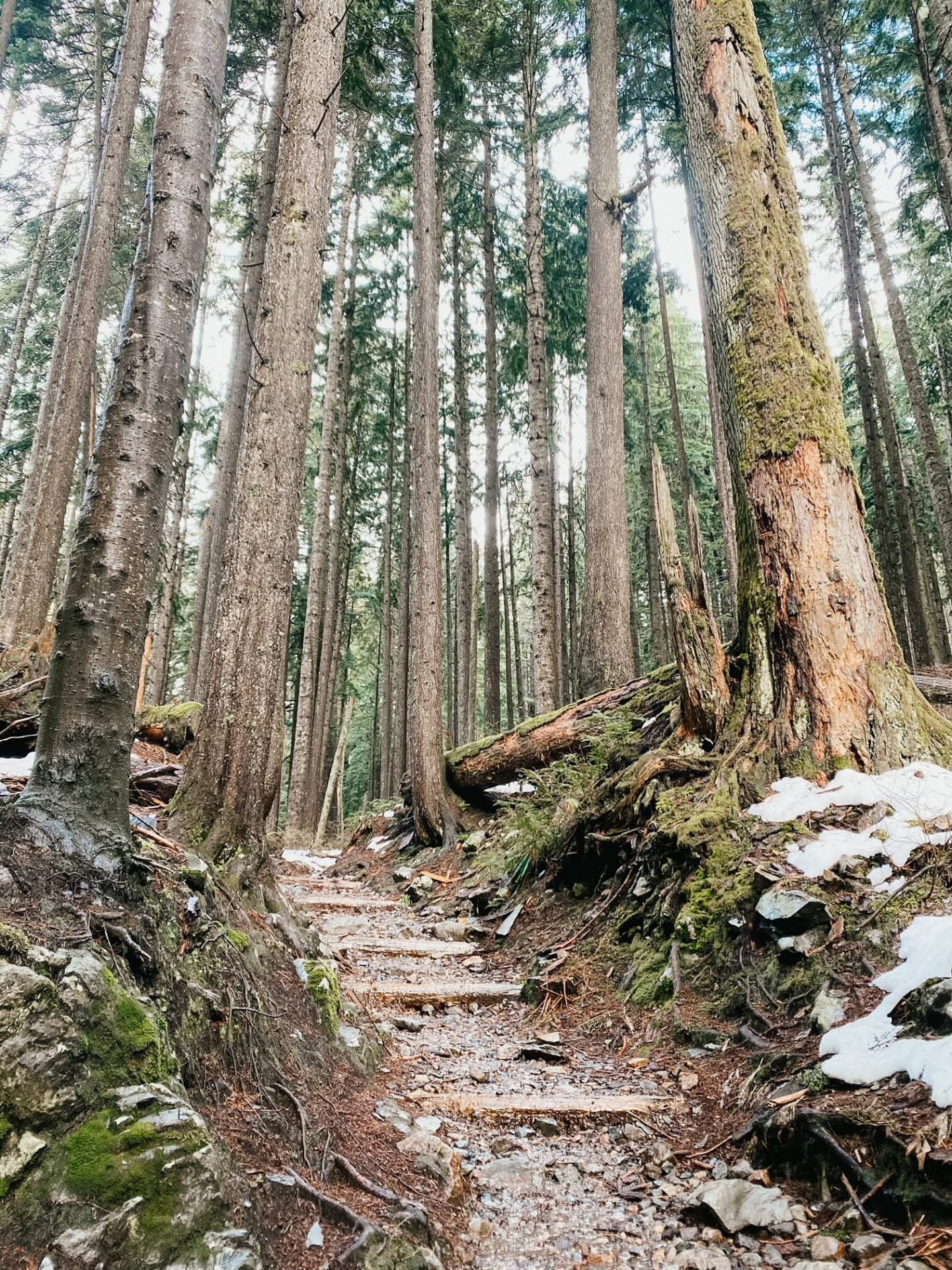 forest hikes snoqualmie