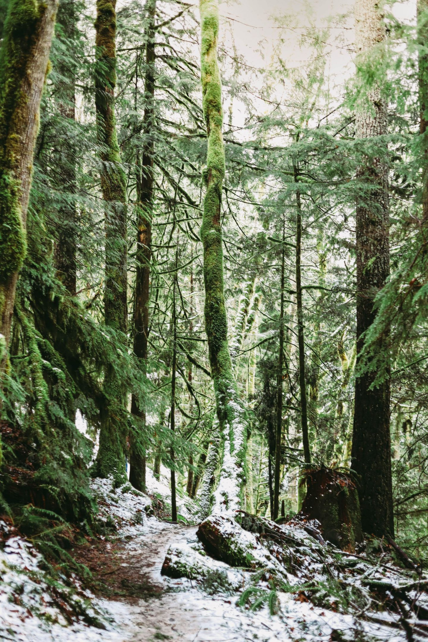most popular hikes near jblm