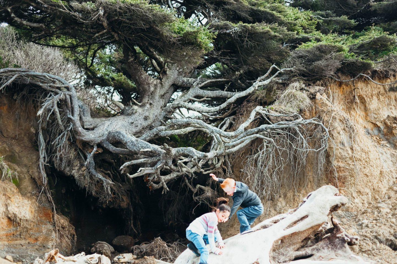 tree of life olympics