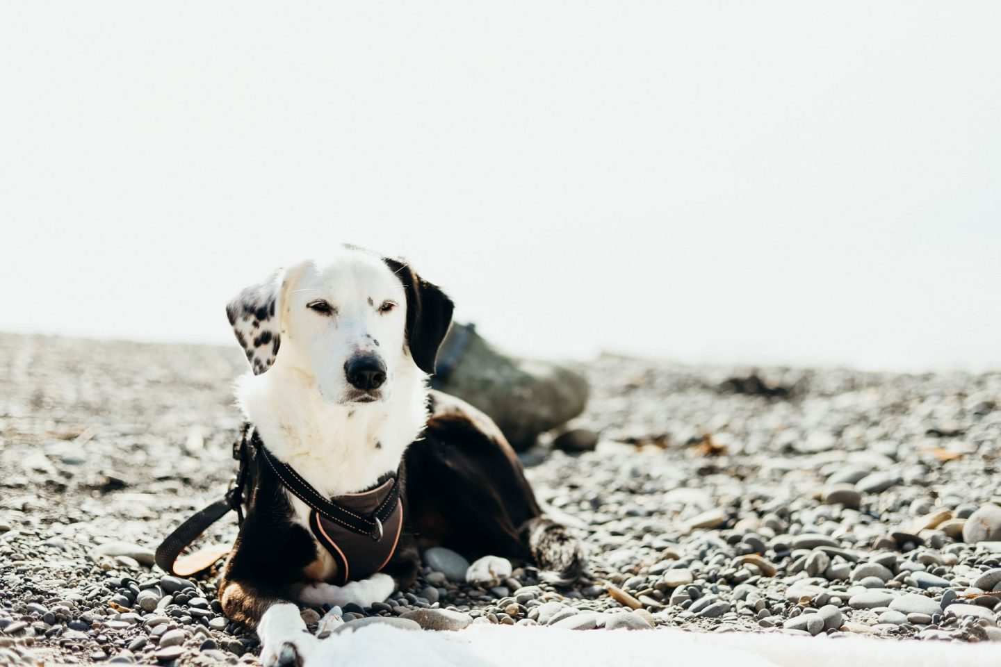 dogs allowed at ruby beach