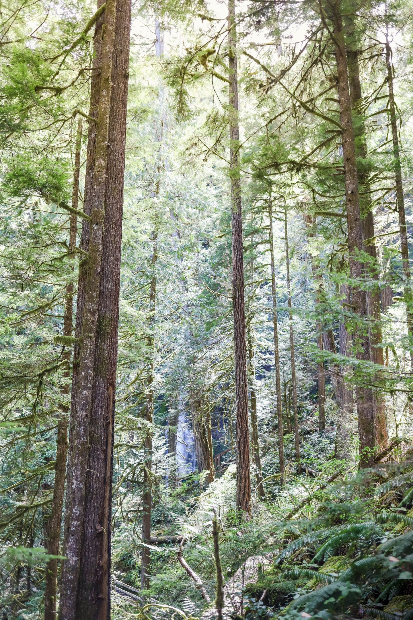 olympic national park hikes