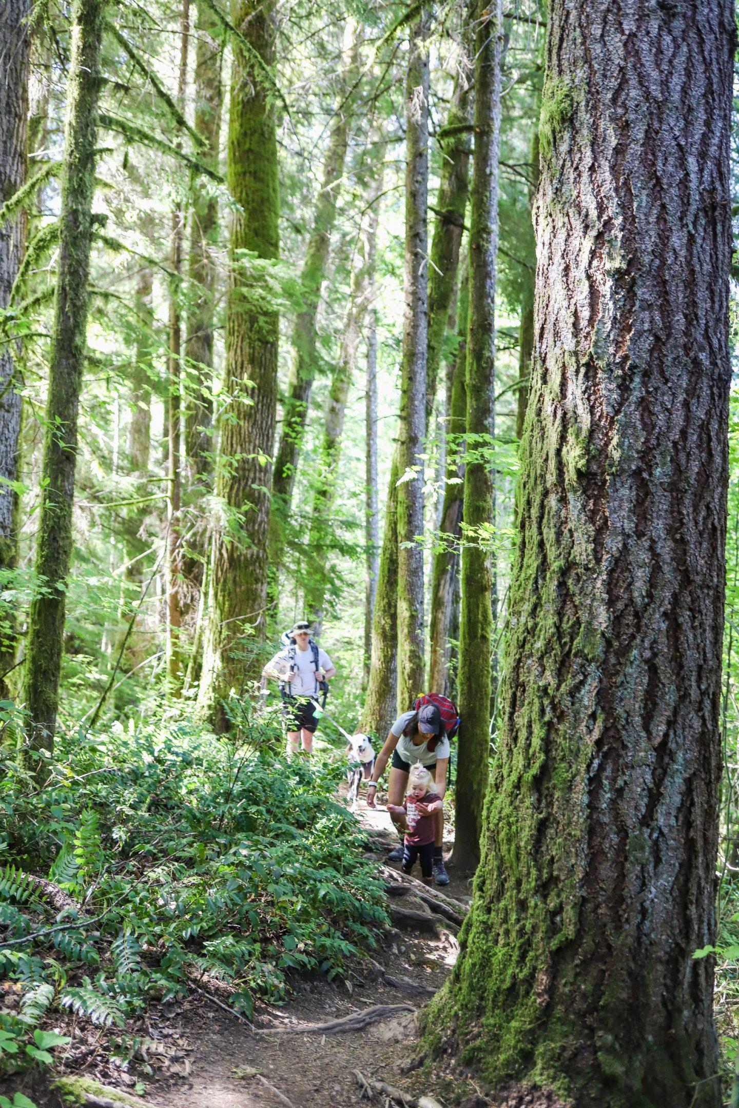 best hiking in north bend wa
