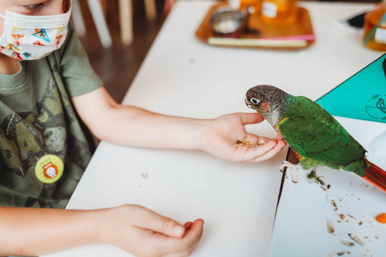 bird sori cafe