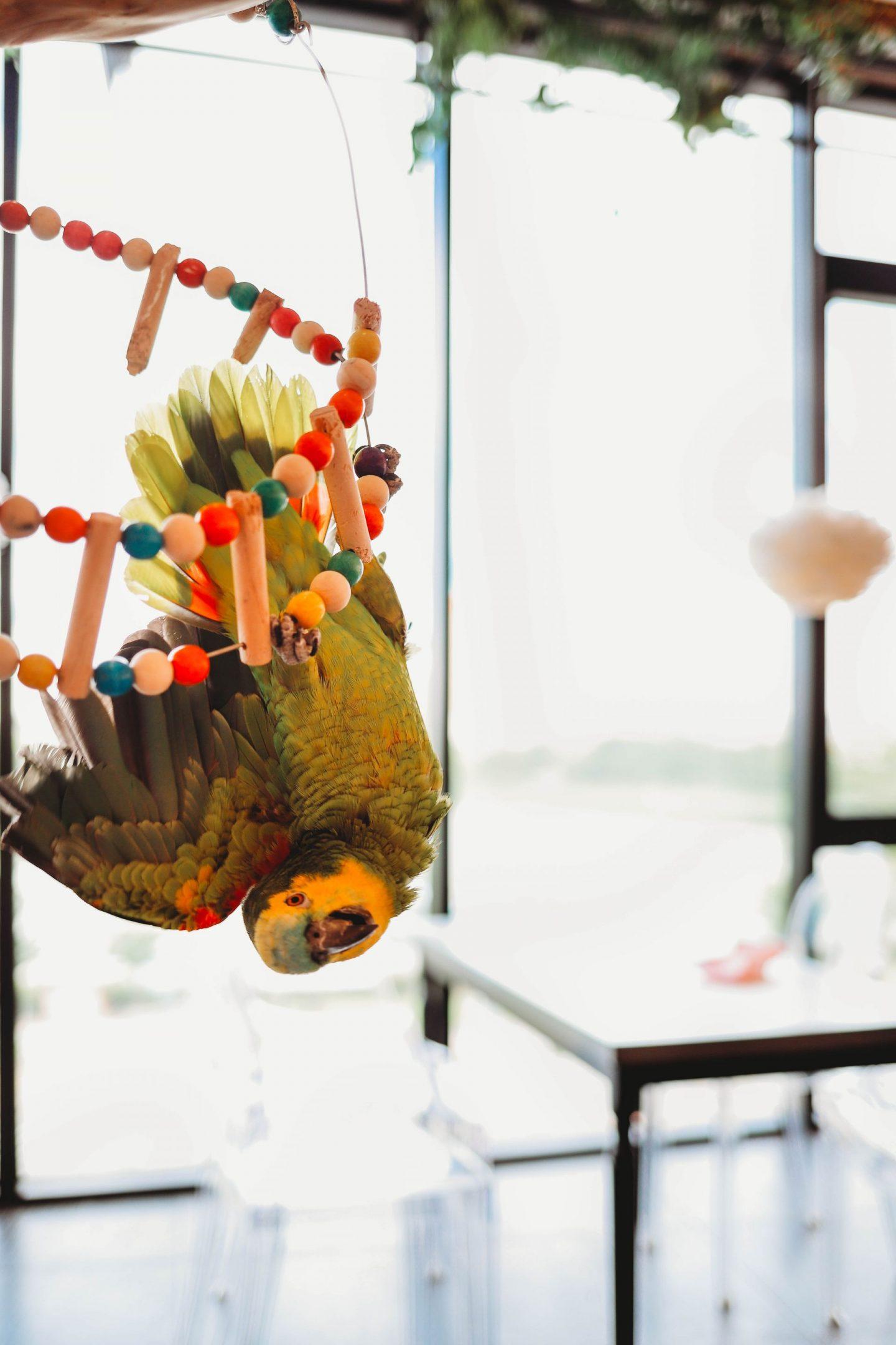 macaw bird sori