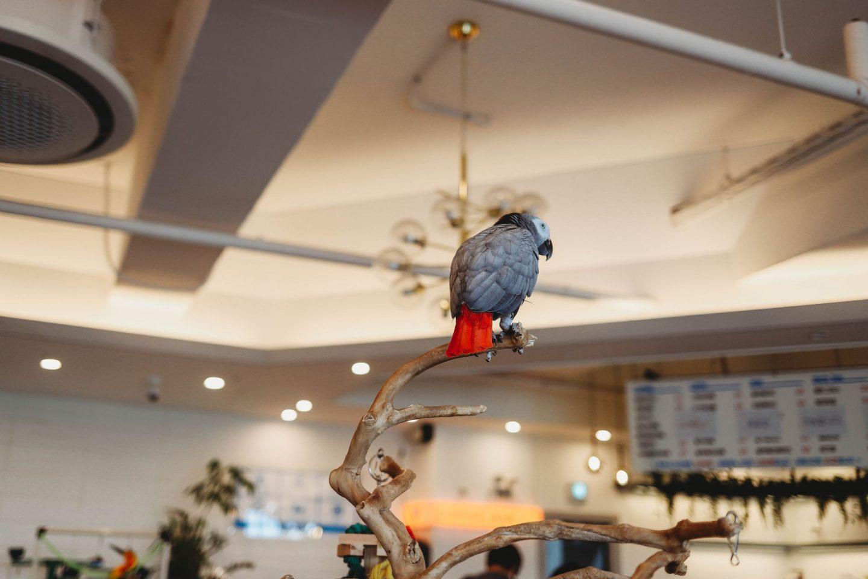 bird sori kid friendly