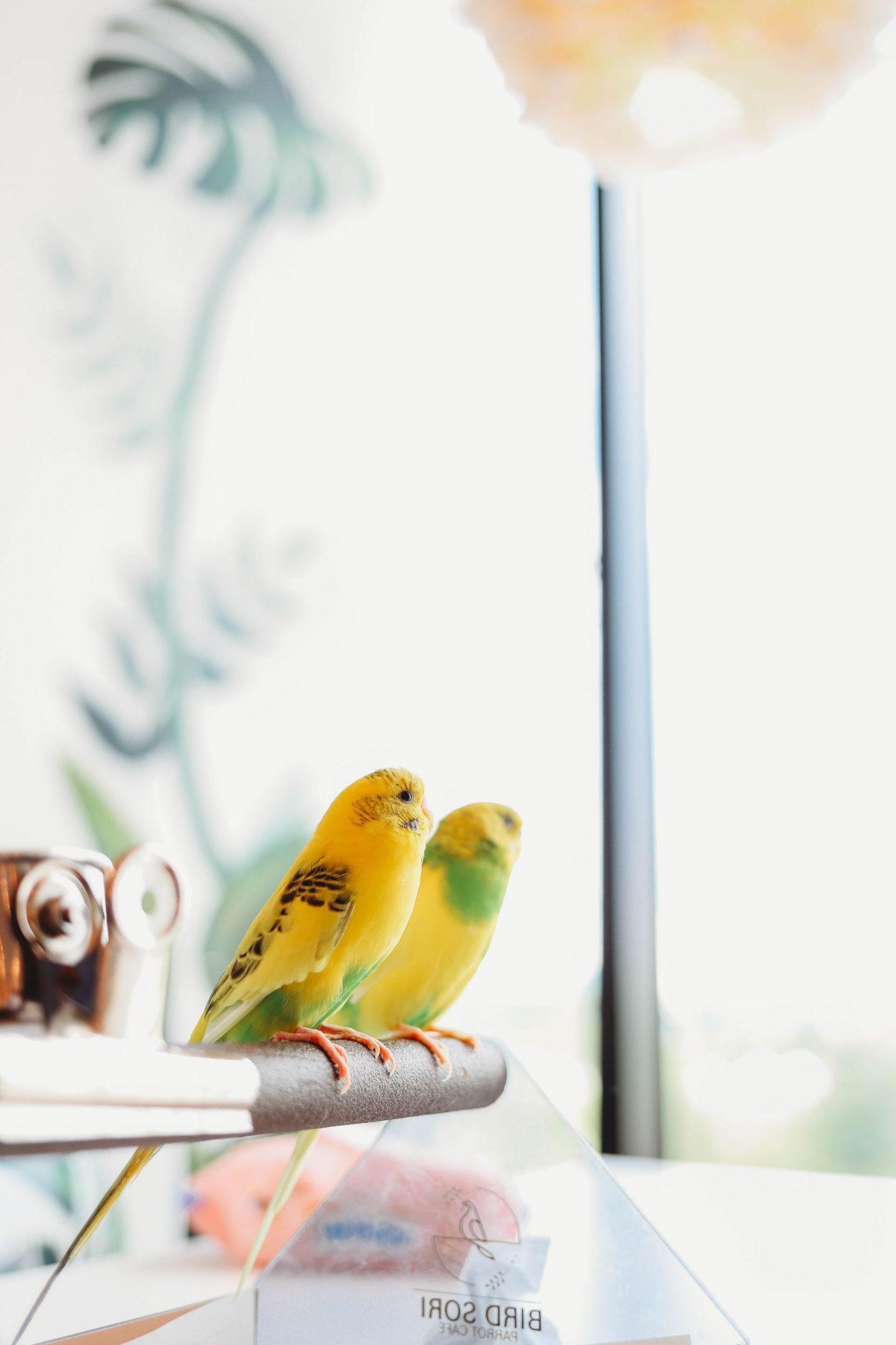 bird sori cafe pyeongtaek