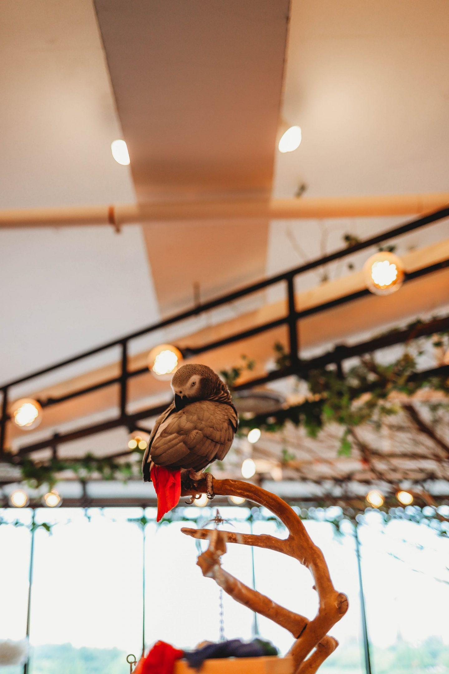parrot cafe korea